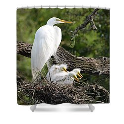 Great Egret Family  Shower Curtain by Richard Bryce and Family