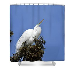Shower Curtain featuring the photograph Great Egret by Gary Wightman