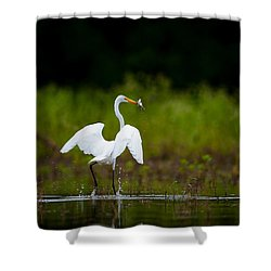 Great Egret, Great Fisherman Shower Curtain