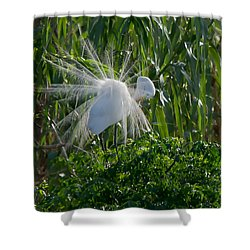 Great Egret In Flight With Windy Plumage Shower Curtain