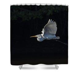 Great Egret In Morning Flight Shower Curtain