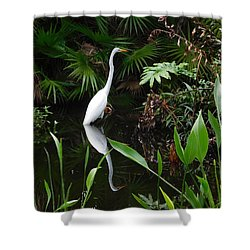 Shower Curtain featuring the photograph Great Egret In Pond by Melinda Saminski