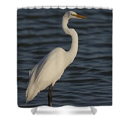 Great Egret In The Last Light Of The Day Shower Curtain