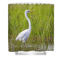 Shower Curtain featuring the photograph Great Egret In The Spring  by Ricky L Jones
