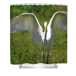 Great Egret In Unusual Portrait Shower Curtain