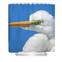 Great Egret Profile Shower Curtain by John Roberts