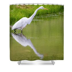 Shower Curtain featuring the photograph Great Egret Ready To Pounce by Ricky L Jones