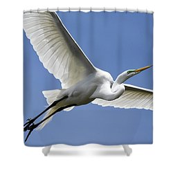 Shower Curtain featuring the photograph Great Egret Soaring by Gary Wightman
