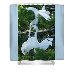 Great Egrets Horsing Around Shower Curtain
