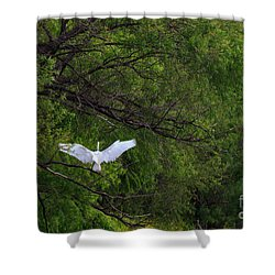 Great Egrets In The Shore Shower Curtain