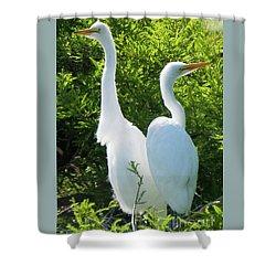 Great Egrets Standing Watch Shower Curtain