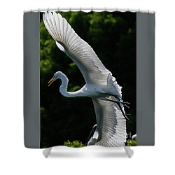 Great Egret's Wingspan Shower Curtain