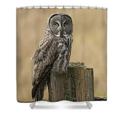 Great Gray Owl Shower Curtain by Doug Herr
