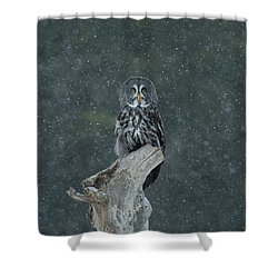 Great Gray Owl In Snowstorm Shower Curtain