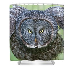Great Gray Owl Flight Portrait Shower Curtain