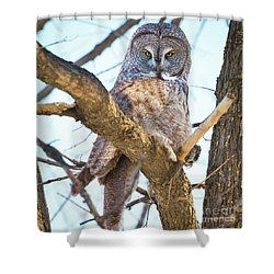 Great Gray Owl Shower Curtain by Ricky L Jones
