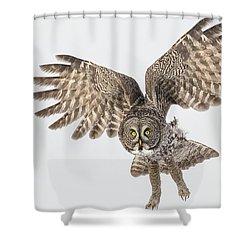 Great Grey Flight  Shower Curtain