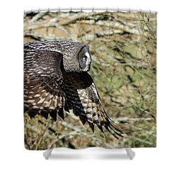Great Grey Flying Shower Curtain by Torbjorn Swenelius