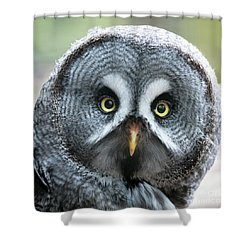 Great Grey Owl Closeup Shower Curtain
