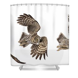 Shower Curtain featuring the photograph Great Grey Owl Hunting by Mircea Costina Photography
