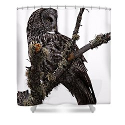 Great Grey Owl Shower Curtain by Larry Ricker