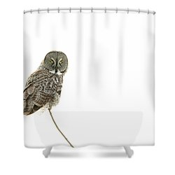 Shower Curtain featuring the photograph Great Grey Owl On White by Mircea Costina Photography