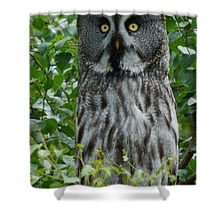 Shower Curtain featuring the photograph Great Grey Owl - Surprised by Phil Banks