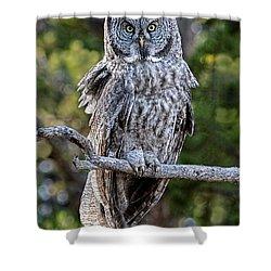 Great Grey Owl Yellowstone Shower Curtain