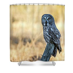 Great Grey Perching Shower Curtain by Torbjorn Swenelius