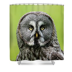 Great Grey's Portrait Closeup Square Shower Curtain
