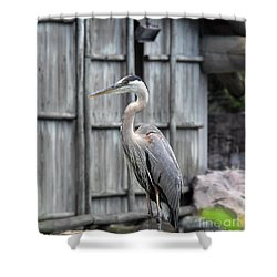 Shower Curtain featuring the photograph Great Heron by John Black