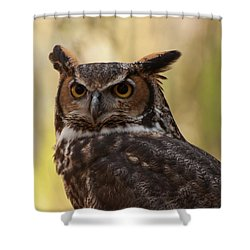 Great Horned Owl In A Tree 1 Shower Curtain by Chris Flees