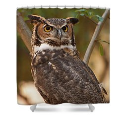 Great Horned Owl In A Tree 3 Shower Curtain by Chris Flees