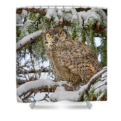 Great Horned Owl In Snow Shower Curtain