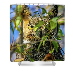 Great Horned Owl Peeking At It's Prey Shower Curtain