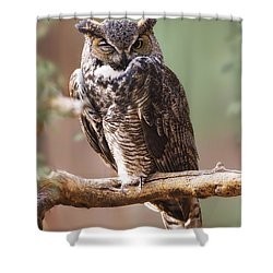 Great Horned Owl Perched On Branch Shower Curtain