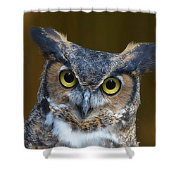 Great Horned Owl Portrait Shower Curtain by Kathy Baccari