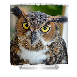 Great Horned Owl  Shower Curtain by Richard Bryce and Family