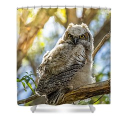 Great-horned Owlet In Spring Shower Curtain by Yeates Photography