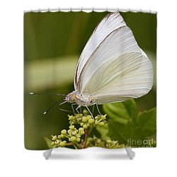 Great Southern White Butterfly Shower Curtain by Myrna Bradshaw