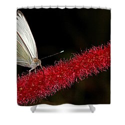 Shower Curtain featuring the photograph Great Southern White by Judy Vincent