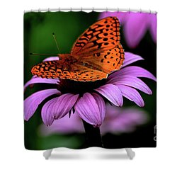 Great Spangled Fritillary Shower Curtain by Brenda Bostic