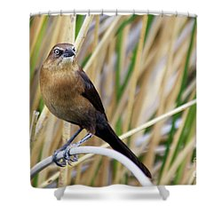 Great-tailed Grackle Shower Curtain by Afrodita Ellerman