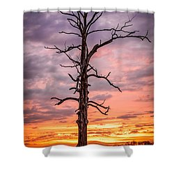 Great Tree At Sunset Shower Curtain by Wayne King