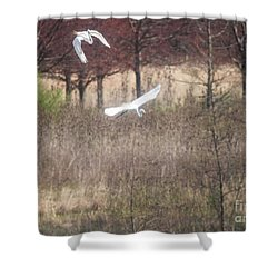 Shower Curtain featuring the photograph Great White Egret - 3 by David Bearden