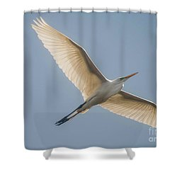 Shower Curtain featuring the photograph Great White Egret by David Bearden