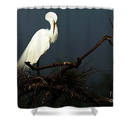 Majestic Great White Egret High Island Texas 2 Shower Curtain by Bob Christopher
