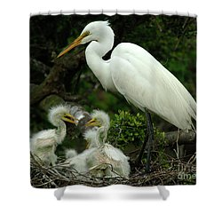 Majestic Great White Egret High Island Texas 4 Shower Curtain by Bob Christopher