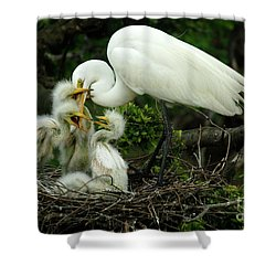 Majestic Great White Egret High Island Texas 9 Shower Curtain by Bob Christopher