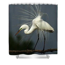 Majestic Great White Egret High Island Texas Shower Curtain by Bob Christopher